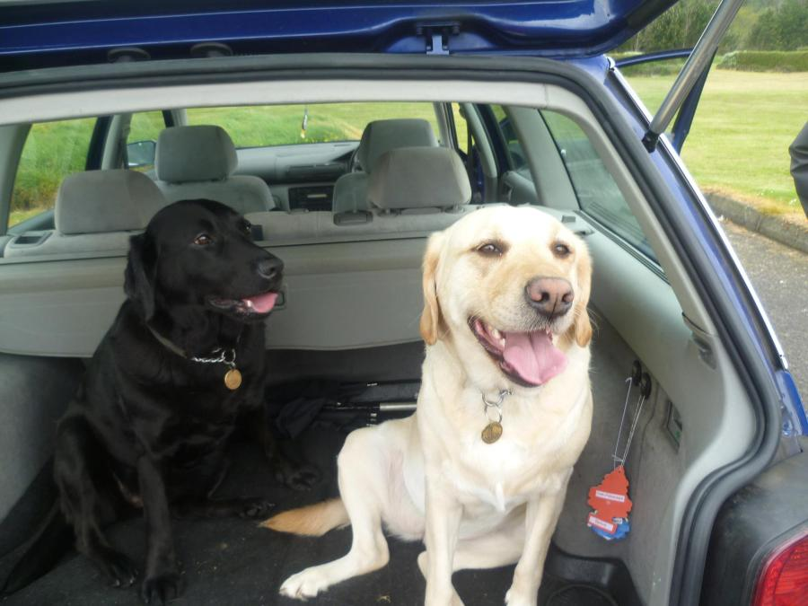 Ushi and Della in a car with their tongues hanging out after a mad run.