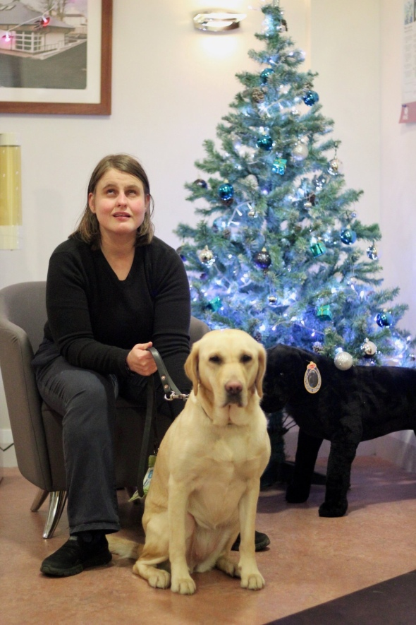 yello lab retriever cross Vivvy and I sit in front of the Guide dogs Northern Ireland christmas tree.